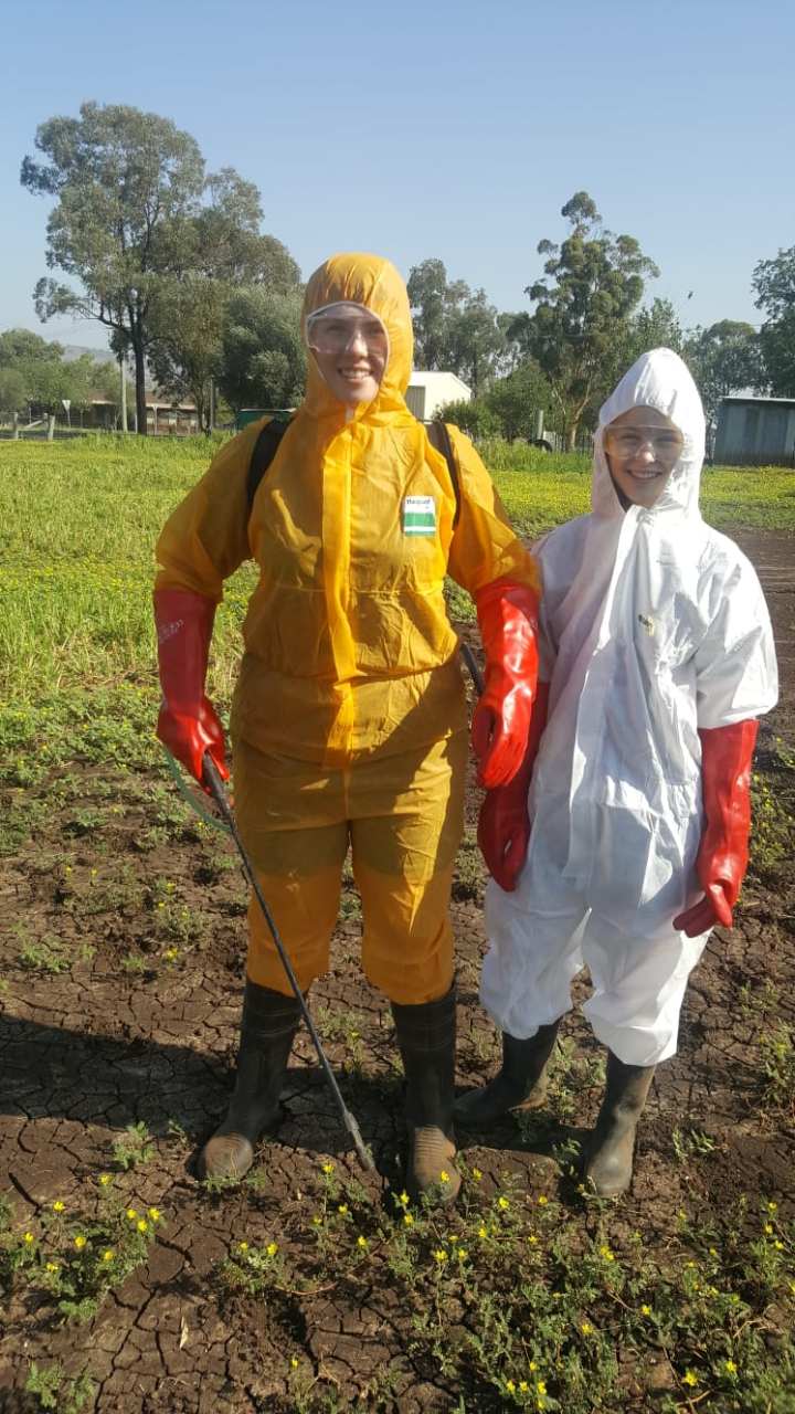 Students spraying weeds in protective clothing